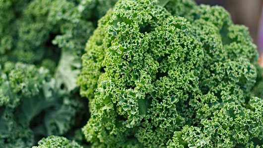 how-to-grow-kale